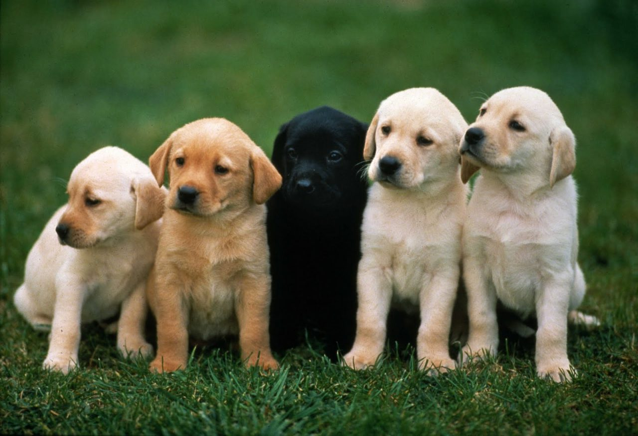 Doggy DNA - Learn How to Determine Your Dog's Breed ...