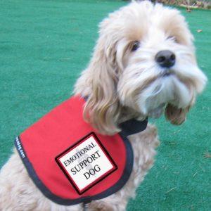 emotional-support-dog1