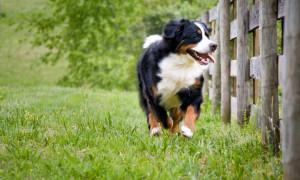 Top family dogs Newfoundland