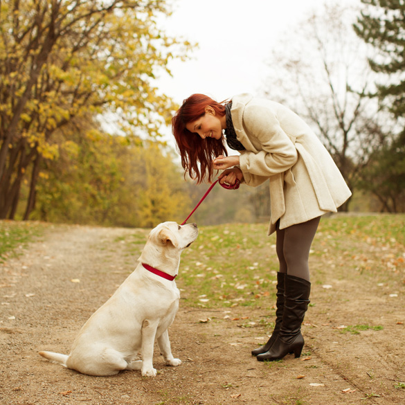 02 A-young-woman-training-a-Labrador-puppy-to-sit-at-a-park