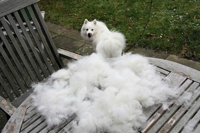 stop how from tricks to for fur sheds the taming prevent dog a tips shedding