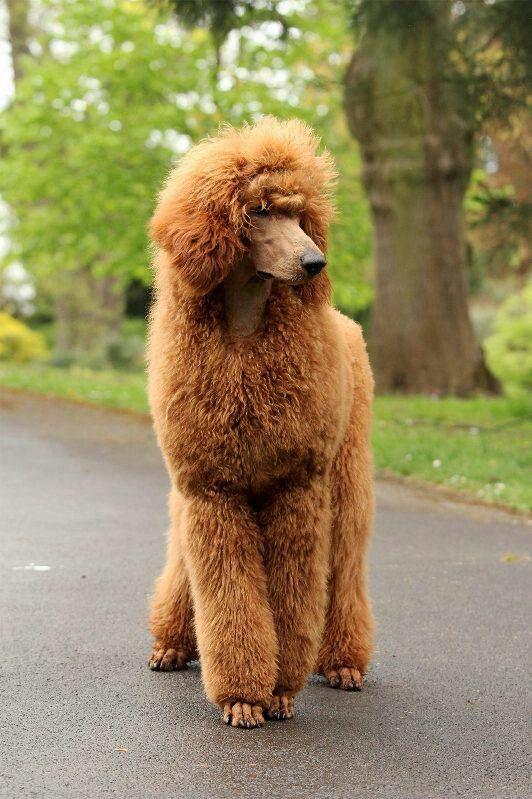 Top 10 Light Shedding Dogs Inside Dogs World