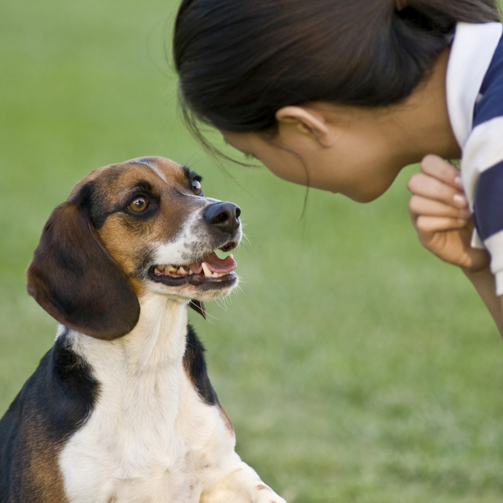 Commands to teach your dog 02