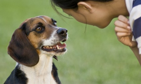 Commands to teach your dog