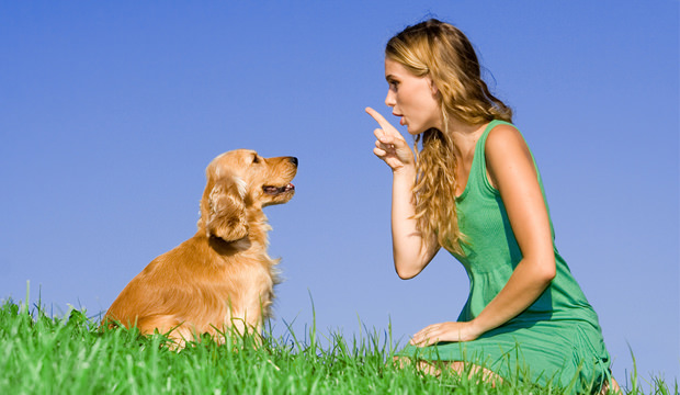 Commands to teach your dog 04