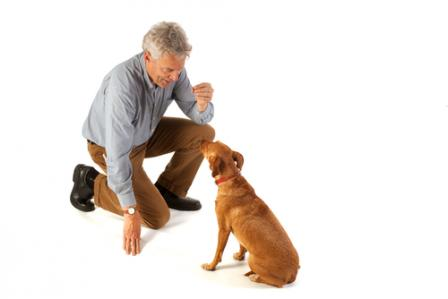 Commands to teach your dog 08