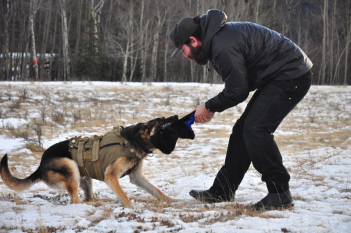 Commands to teach your dog 10