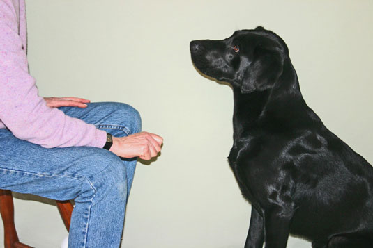 Commands to teach your dog 11