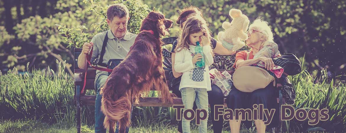 Top Family Dogs