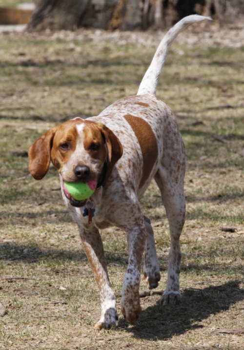 Hound Dogs Breed Group - Inside Dogs World