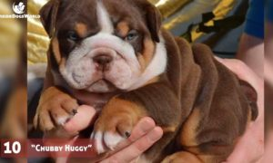 Top 10 most liked Bulldogs photos and captions on Facebook