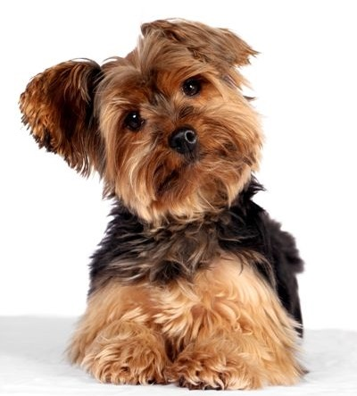 Learn dog grooming breeds