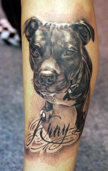 20 Best Pit Bull Tattoo Designs