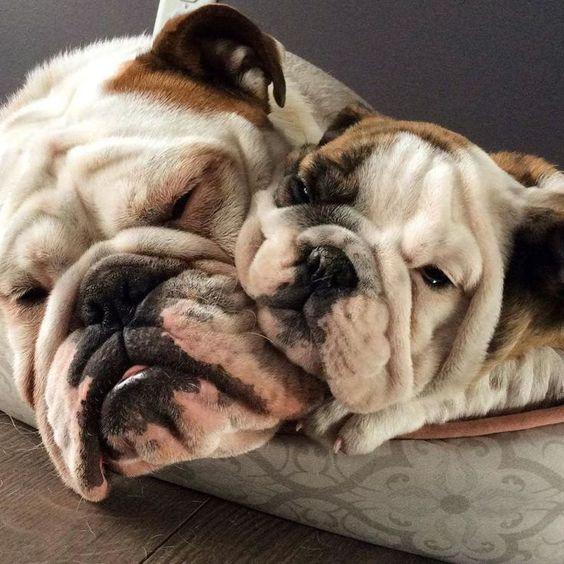 BulldogFathersDay1