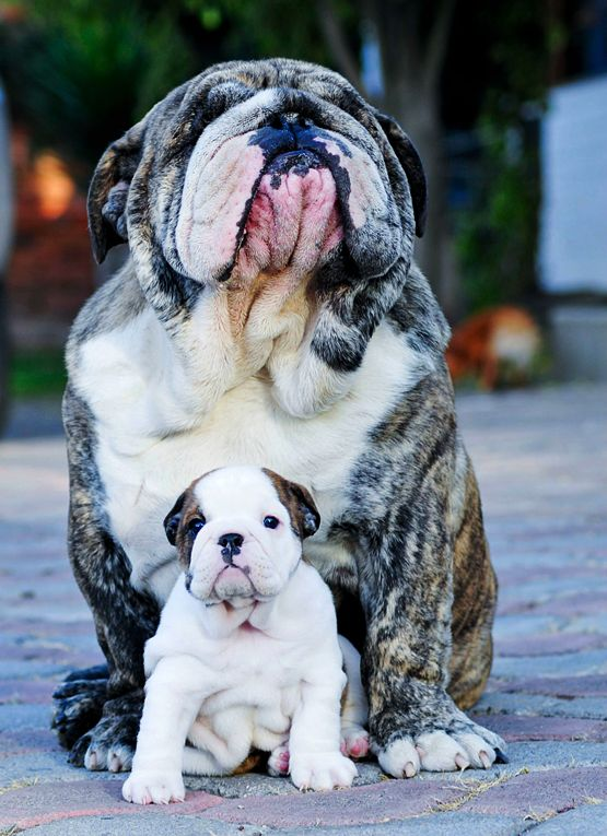 BulldogFathersDay2