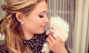 paris-hilton-puppy-instagram