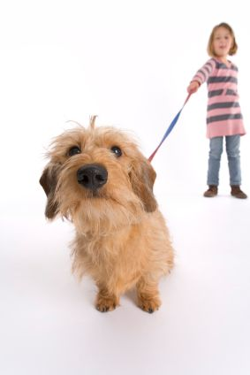 Walking your dog with a loose leash makes him calm, comfortable and relaxed