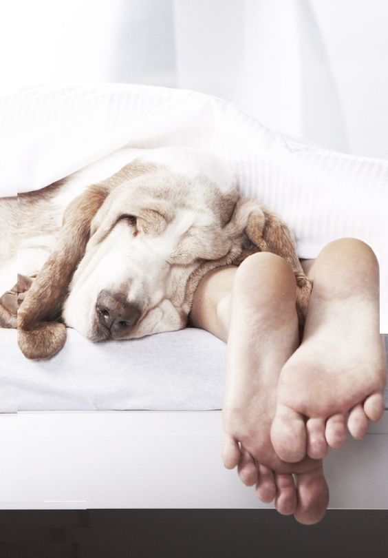 You are important for your dog