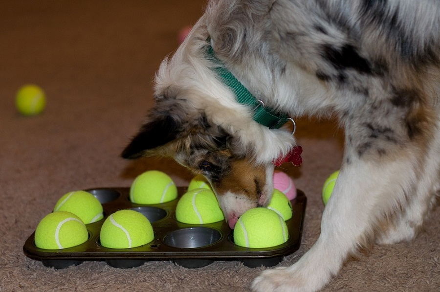 Keep your dog's mind active and curious with this muffin tin game