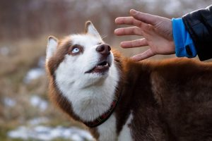 Top 15 Things Humans Do That Dogs Hate