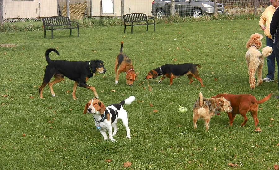 Dogs adore park time and off-leash