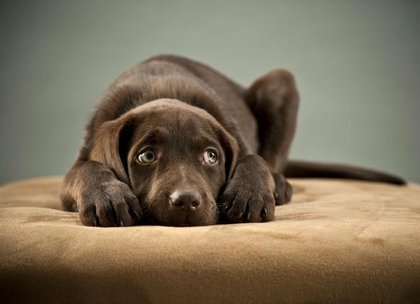Understand your dog's needs