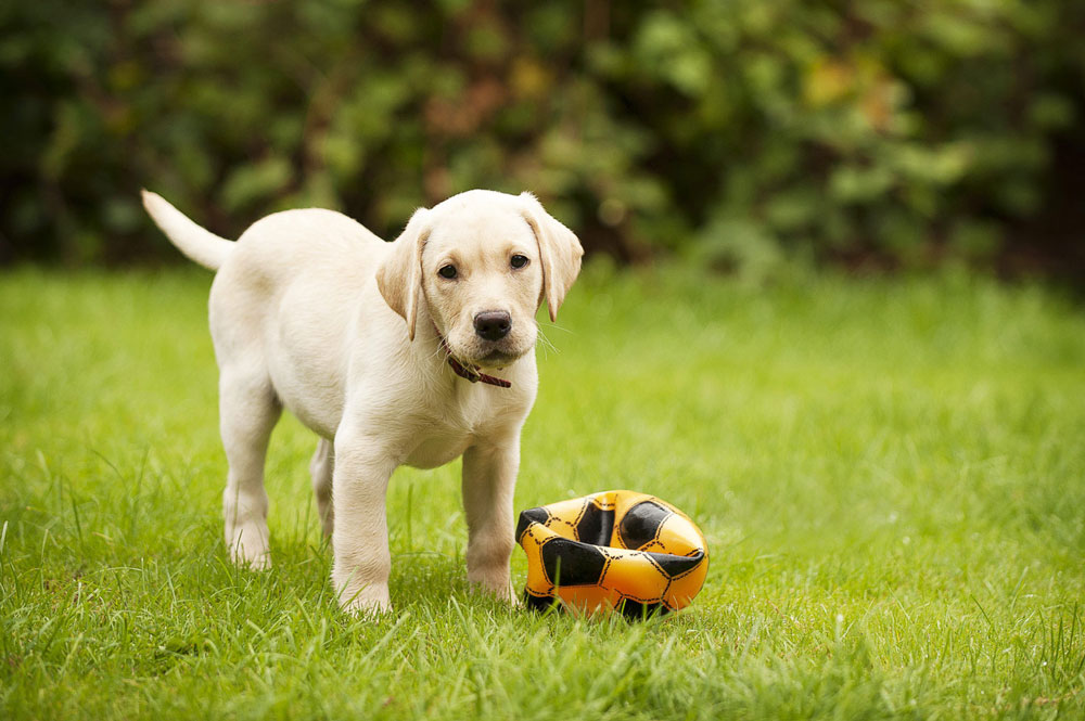 How to Play with Your Dog Using Scent Games | FACE Foundation  |Dog Play
