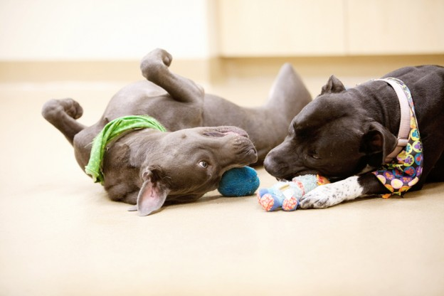 Dogs enjoy playing