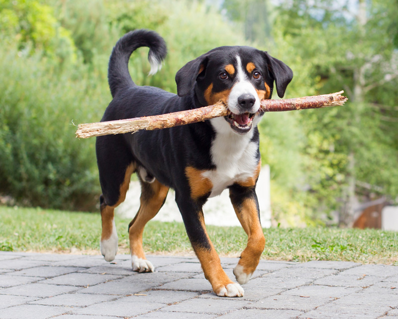 Dogs love playing