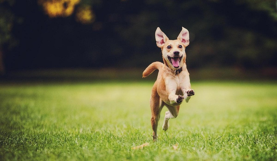 Dogs play make them happy and healthy