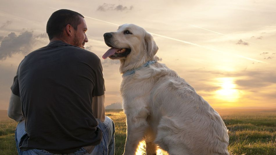 Dogs our very best companions
