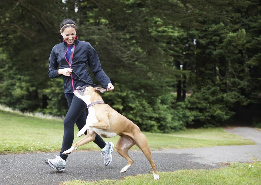 Dogs help us be physically more active