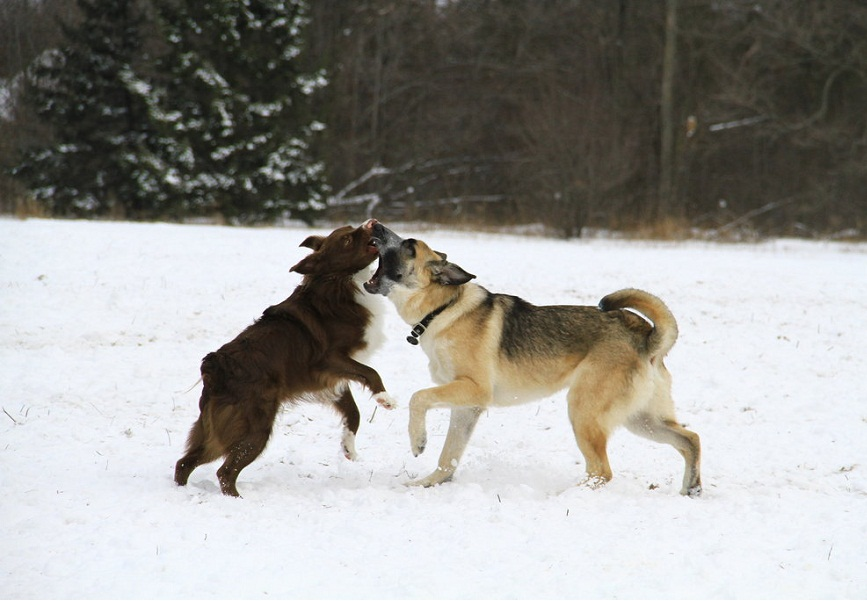Dogs play to boost their emotional flexibility