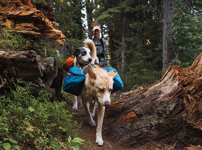 Outdoor adventures with your dog