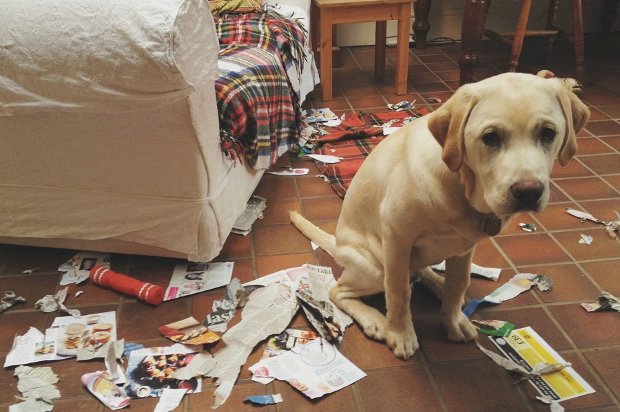 Dogs make us more adoptable