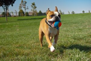Top 5 Fun Outdoor Games for Your Dog