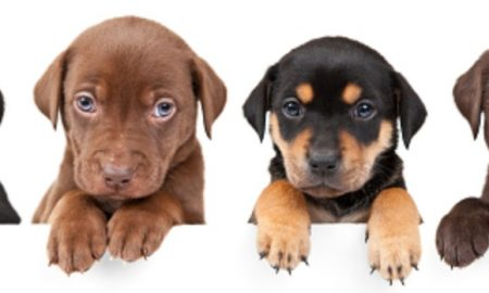 Dog DNA Testing: Learning its many uses