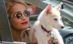 Singer and actress Rita Ora with her Husky Bowie