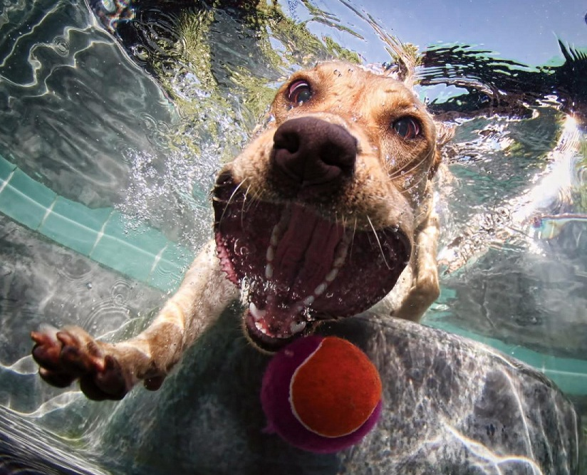 Fetch game, the best one for summer days