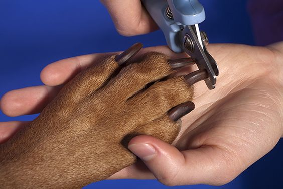 The best way to cut your dog's nails