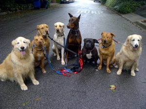 How to introduce your new dog to the pack?
