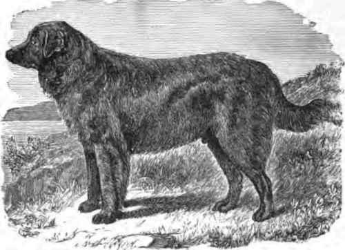Fannie, dog who inherited a fortune
