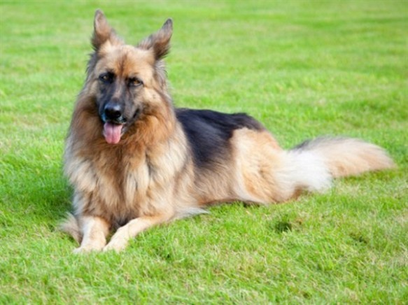 Gunter iv, richest dog in the world