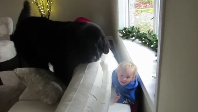 Hide and seek games between kids and dogs