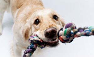 5 Fun Indoor Games for Your Dog