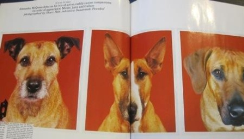 Alexander Mcqueen left 82000 dollar to each of his dogs