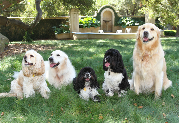 Five Oprah's favorite dogs are among richest dogs in the world