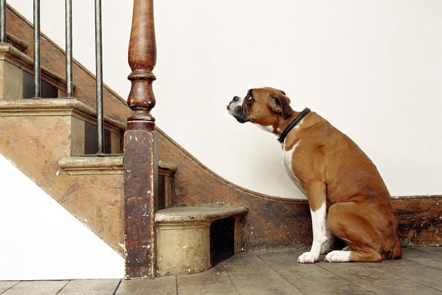 Make your dog physically active with this stair game