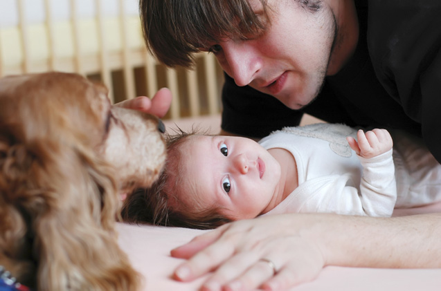 If you can't handle alone preparing your dog for the new baby, it's better to take a professional trainer