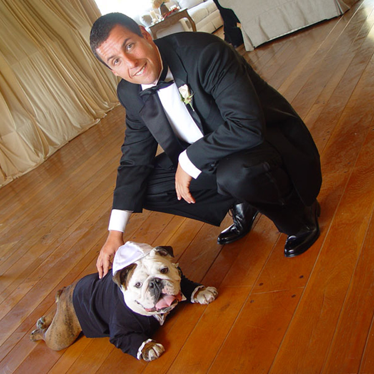 Actor Adam Sandler and his beloved bulldog Meatball